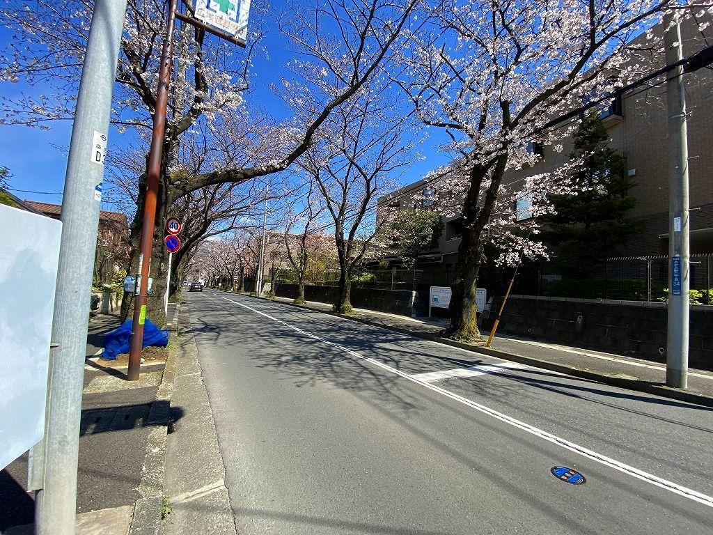 2020年3/24(火)あざみ野の桜通りの様子です。