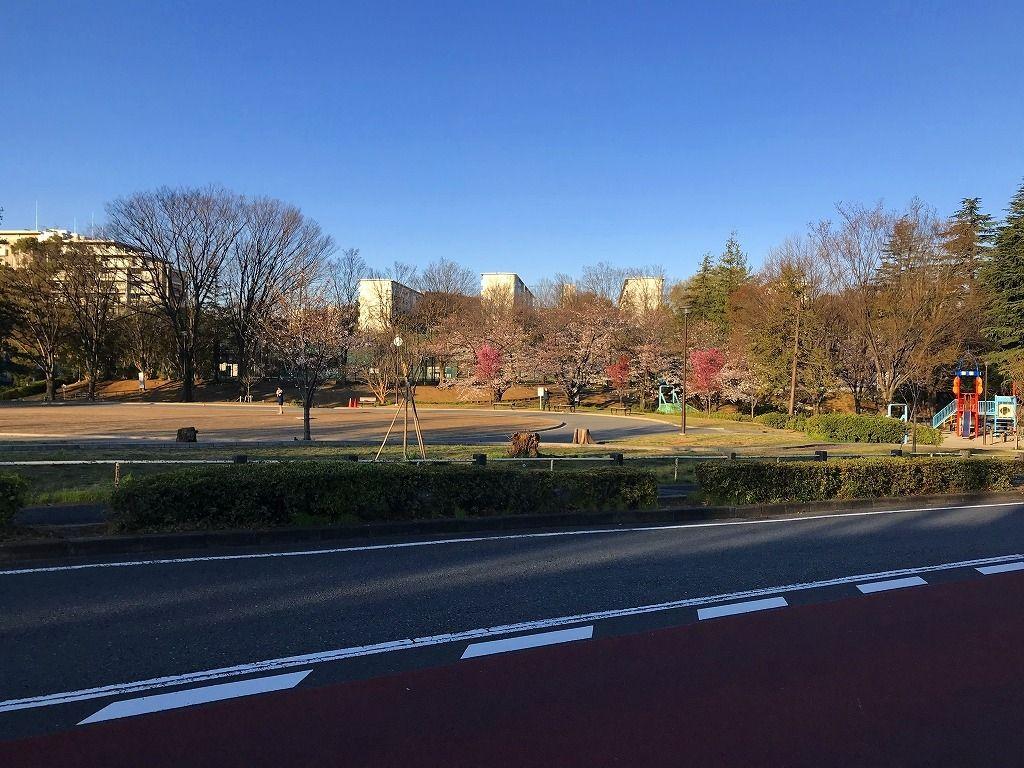 2020年3月25日(水)たまプラーザの美しが丘公園の桜の様子
