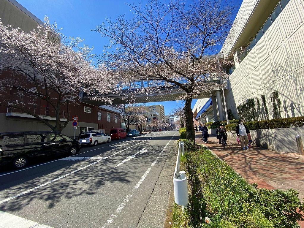 2006年から「たまプラーザ」の桜の記録を毎年始めました。年々桜の木が少なくなってきていますが、たまプラーザの桜の様子を記録していきたいと思います。2010年から始まった「たまプラーザ・桜まつり」の…