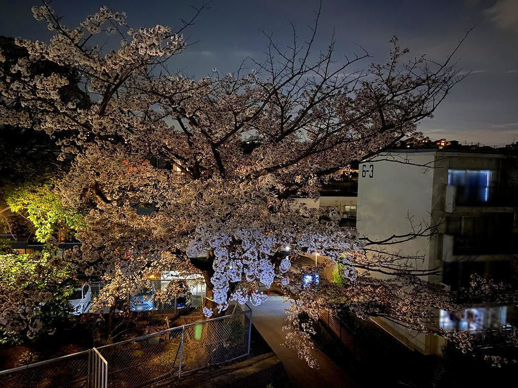 2020年3/23(月)たまプラーザ団地の夜桜