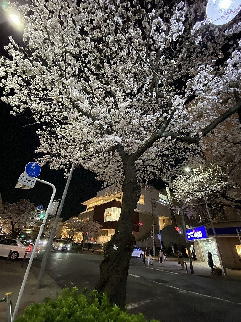 2021年3月26日(金)たまプラーザ駅前の夜の桜の様子です。