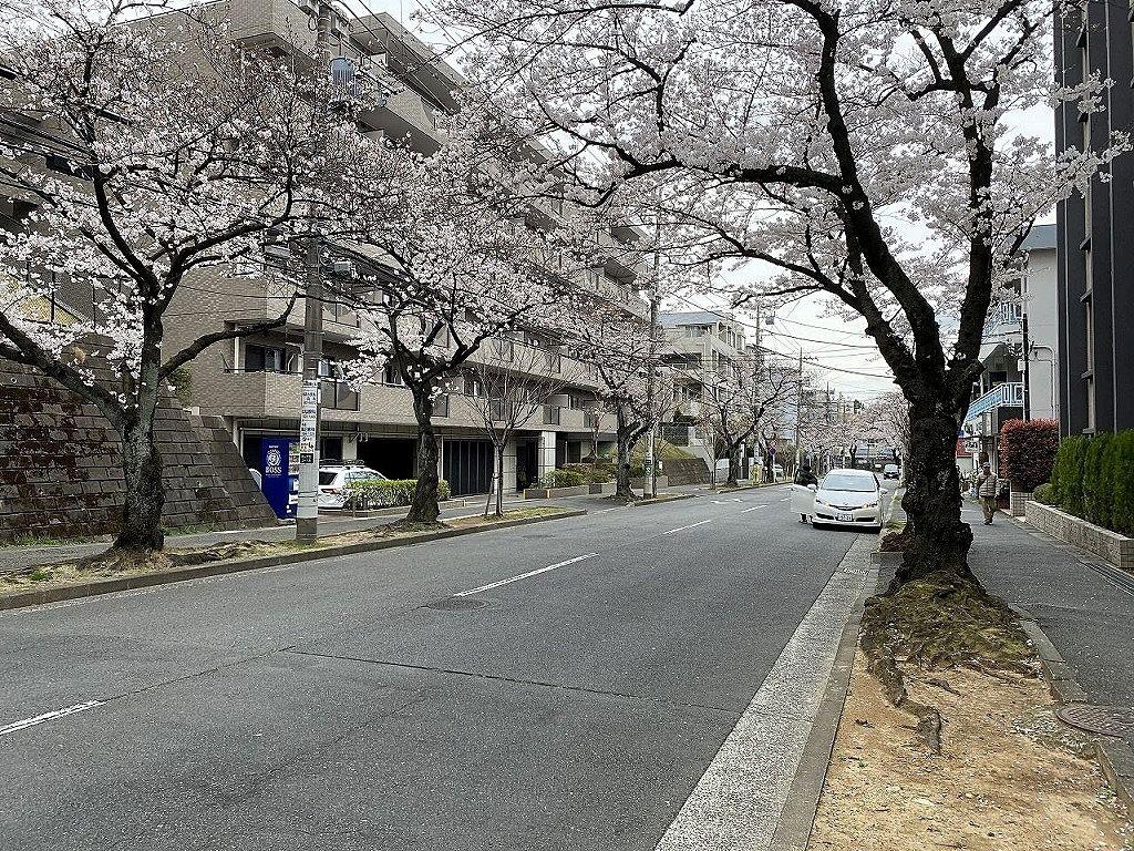 3月25日(木)のたまプラーザ駅周辺の桜の様子です。