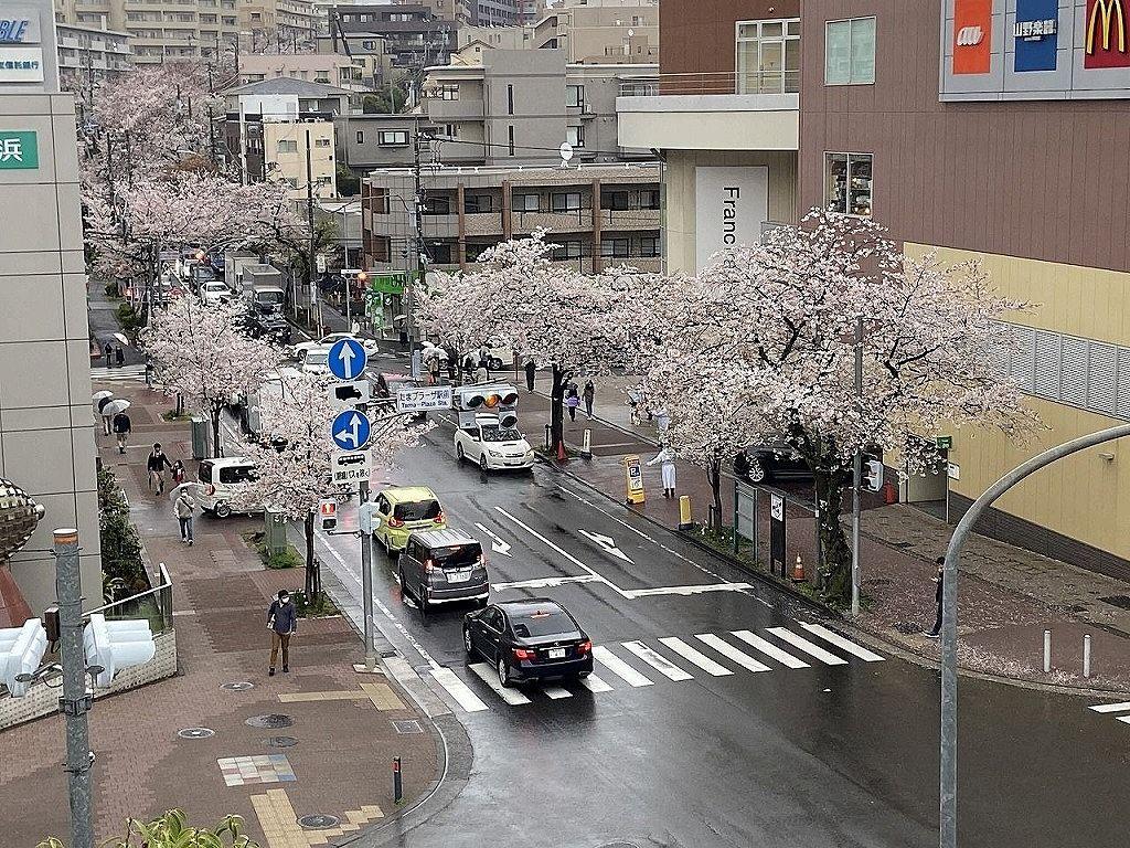 2021年たまプラーザの桜