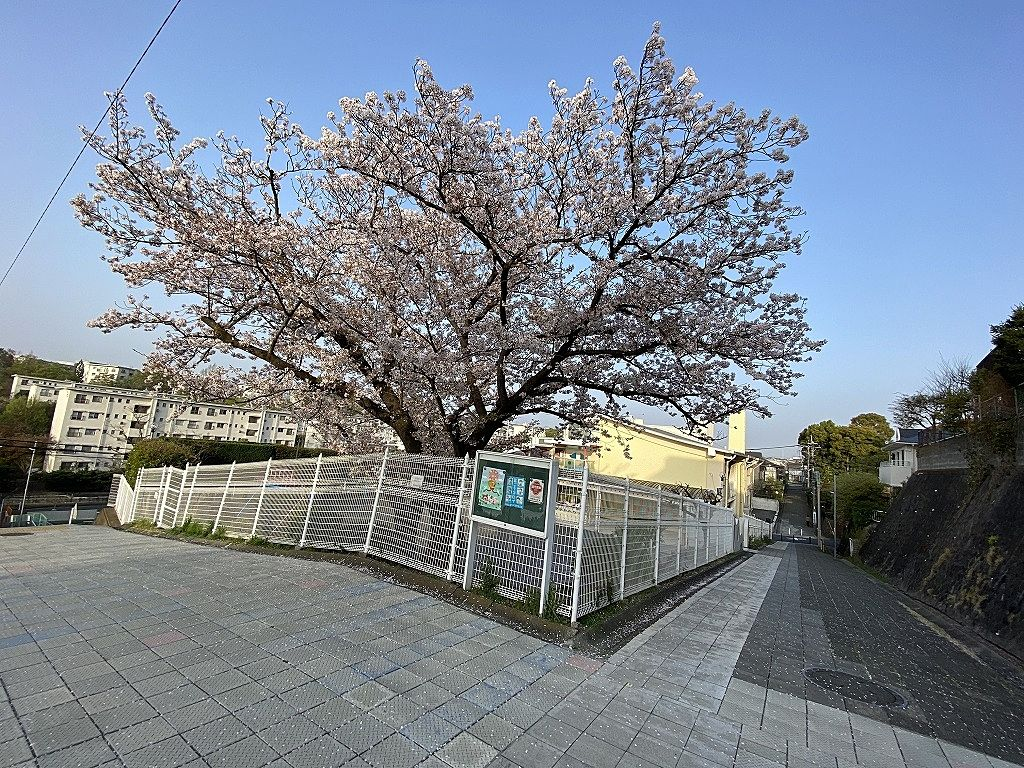 2021年3月31日(月)国学院幼稚園の桜