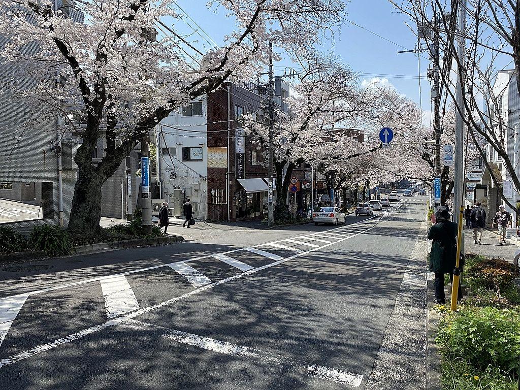 2021年/たまプラーザの桜