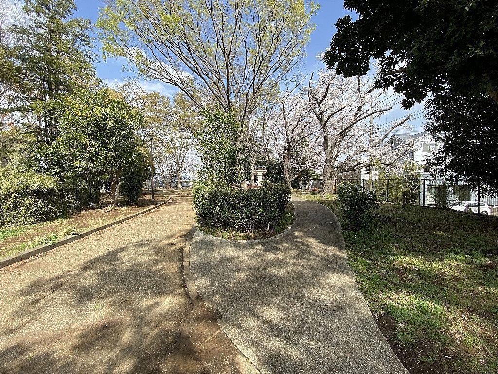 山内公園・散歩道の桜