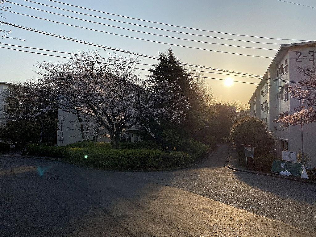 たまプラーザ団地2街区3街区の桜です。