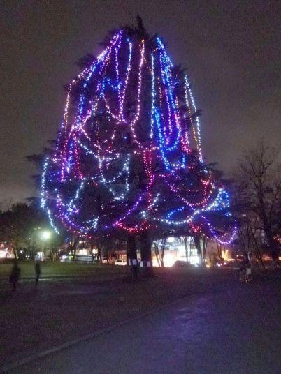 美しが丘公園のクリスマスツリー 今年から飾り付けが始まりました!2011年 たまプラーザ クリスマス